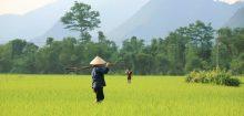 Le Vietnam, un pays qui m'attire énormément