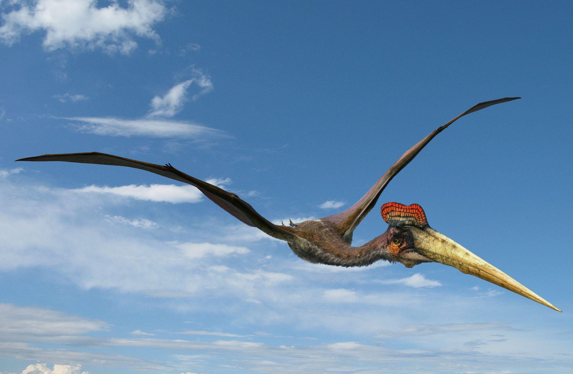 Dinosaure volant d couvrir dans cet article d di la - Dinosaur volant ...