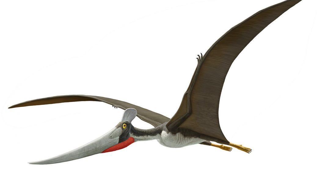 imagesDinosaure-volant-10.jpg